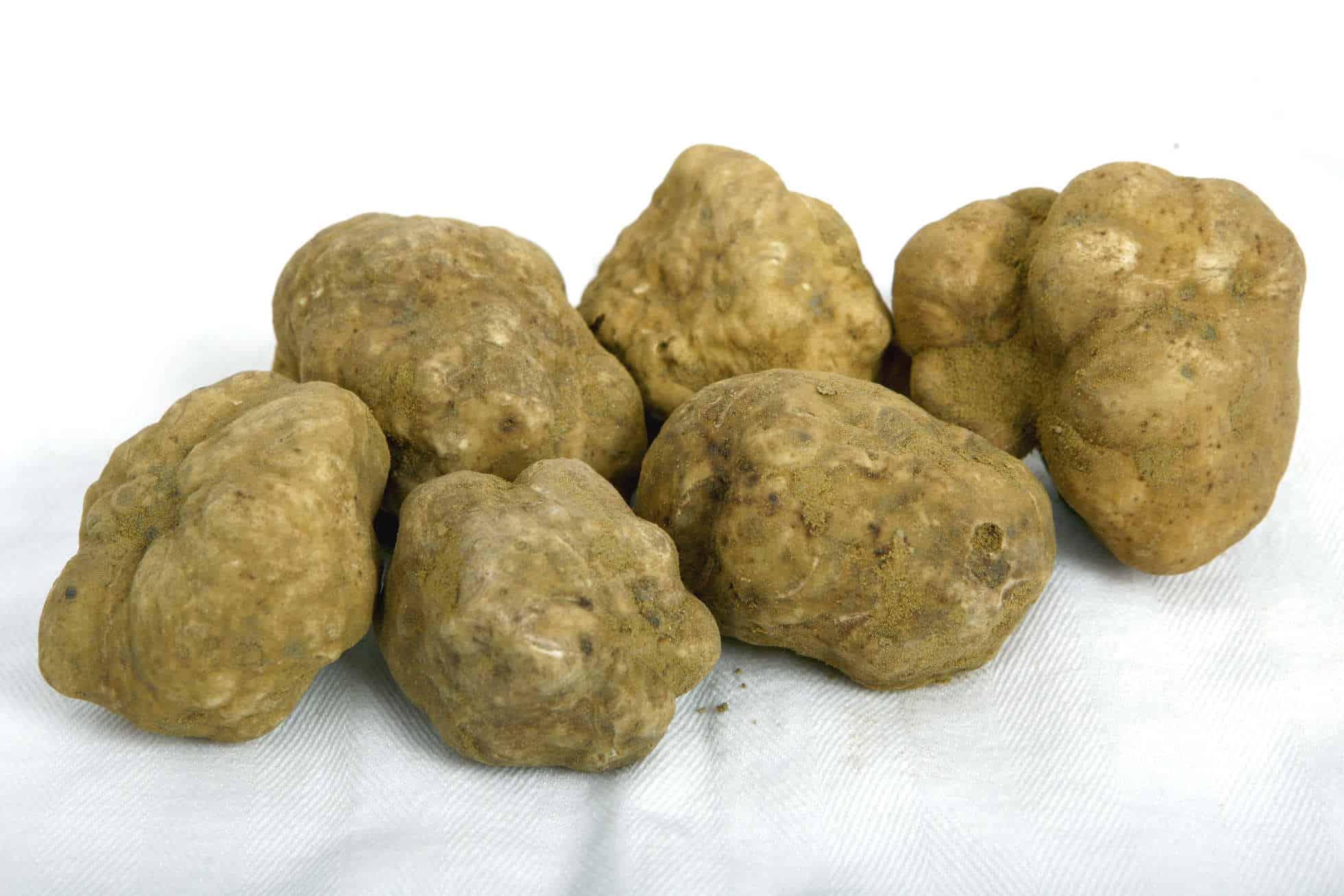 tartufi-bianchi-20-70.jpg-truffes-blanches-dALBA.jpg
