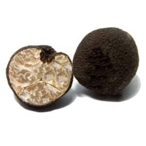 tuberuncinatum.jpg