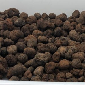 3-kilos-de-petites-tuber-melanosporum-de-fin-de-saison-brossées-à-sec-bien-parfumées-1-2.jpg